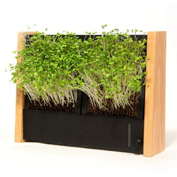 how to decorate with microgreens
